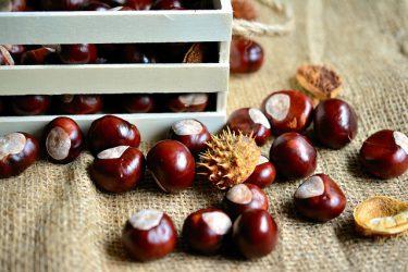 chestnut-3693487_640