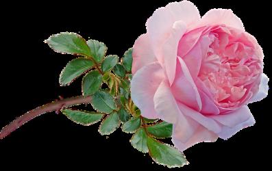 flower-g11cead897_640